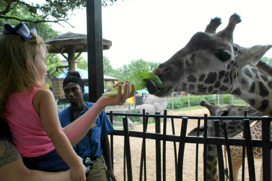 use the Houston CityPASS to visit the zoo and feed the giraffes