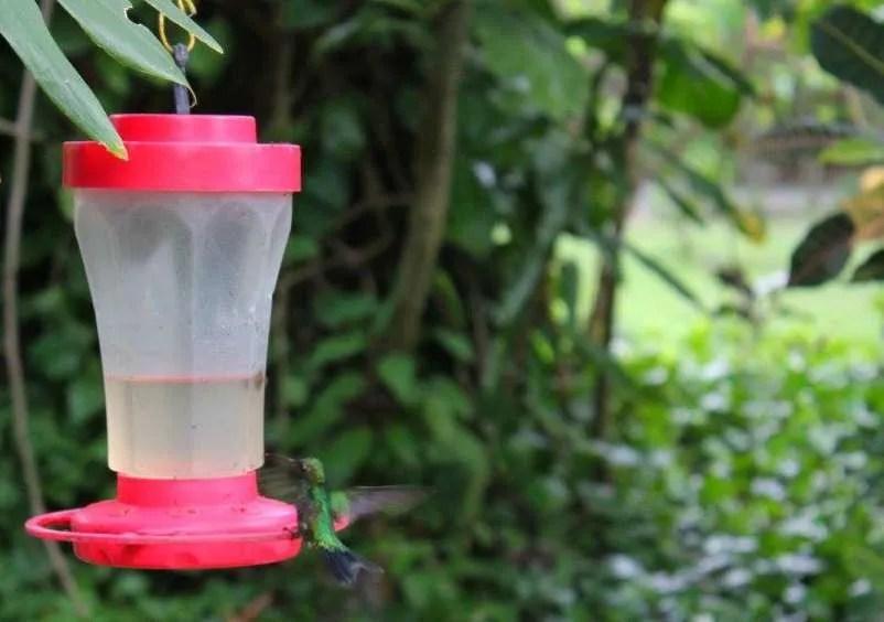 Hummingbird at Gumbalimba Park in Roatan.