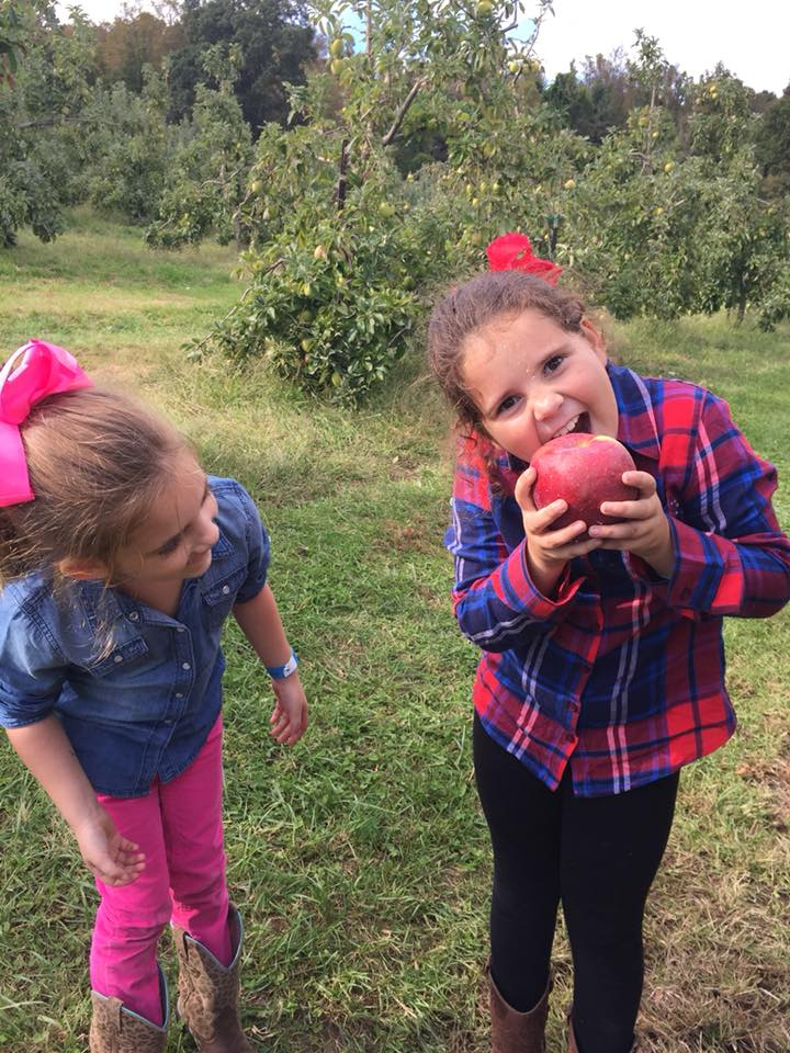 The apples at Stepp's Hillcrest Orchard are HUGE!