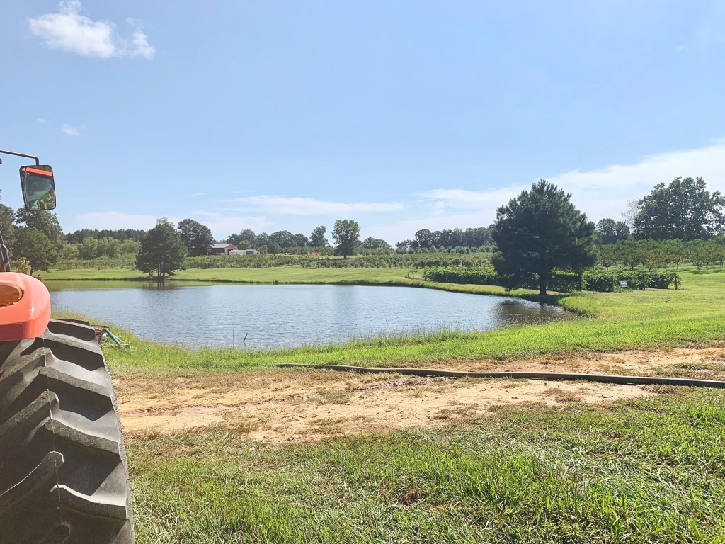 Pond and apple orchard in North Carolina.