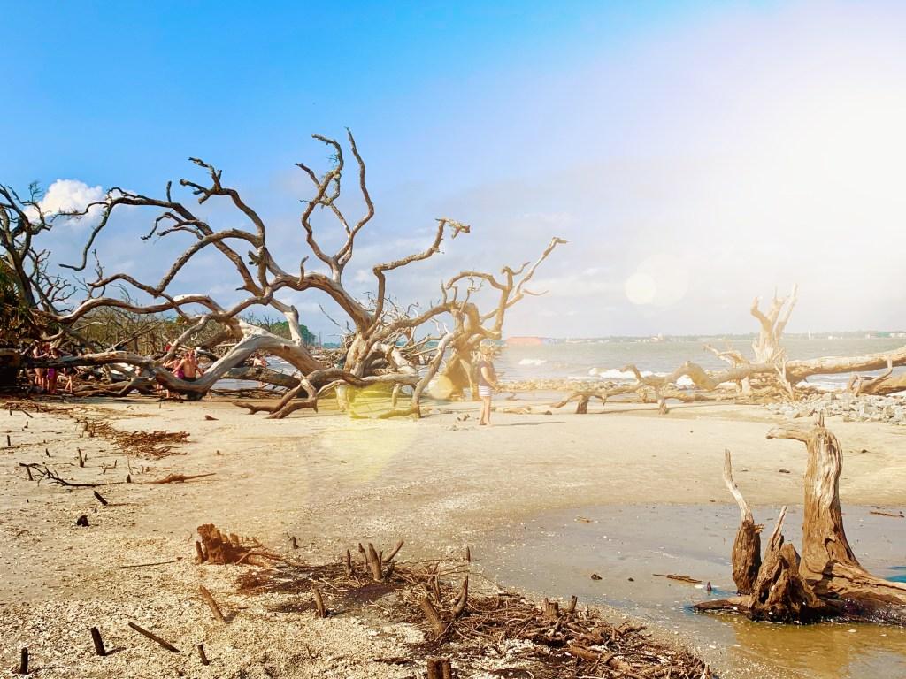 Driftwood Beach on Jekyll Island, Georgia.