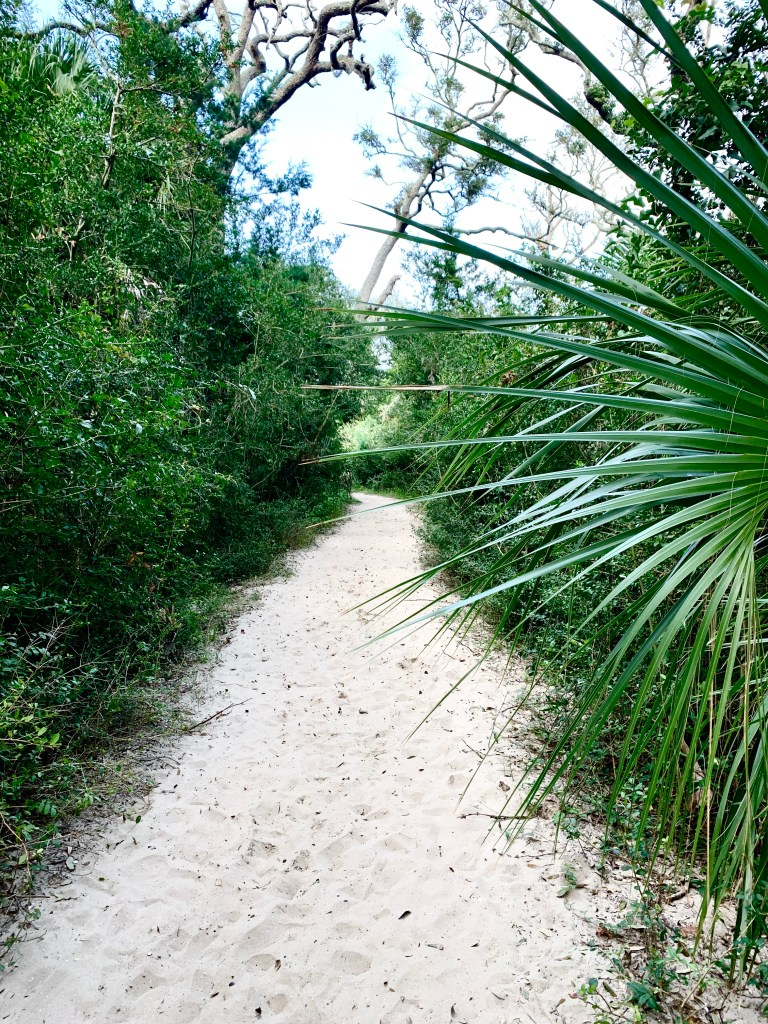 The wooded trail to the beach on Jekyll Island.