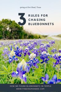 3 Rules for Finding Bluebonnets in Texas   Finding Mandee