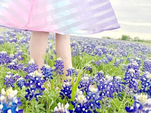 Chasing Texas bluebonnets beside the road in Temple.