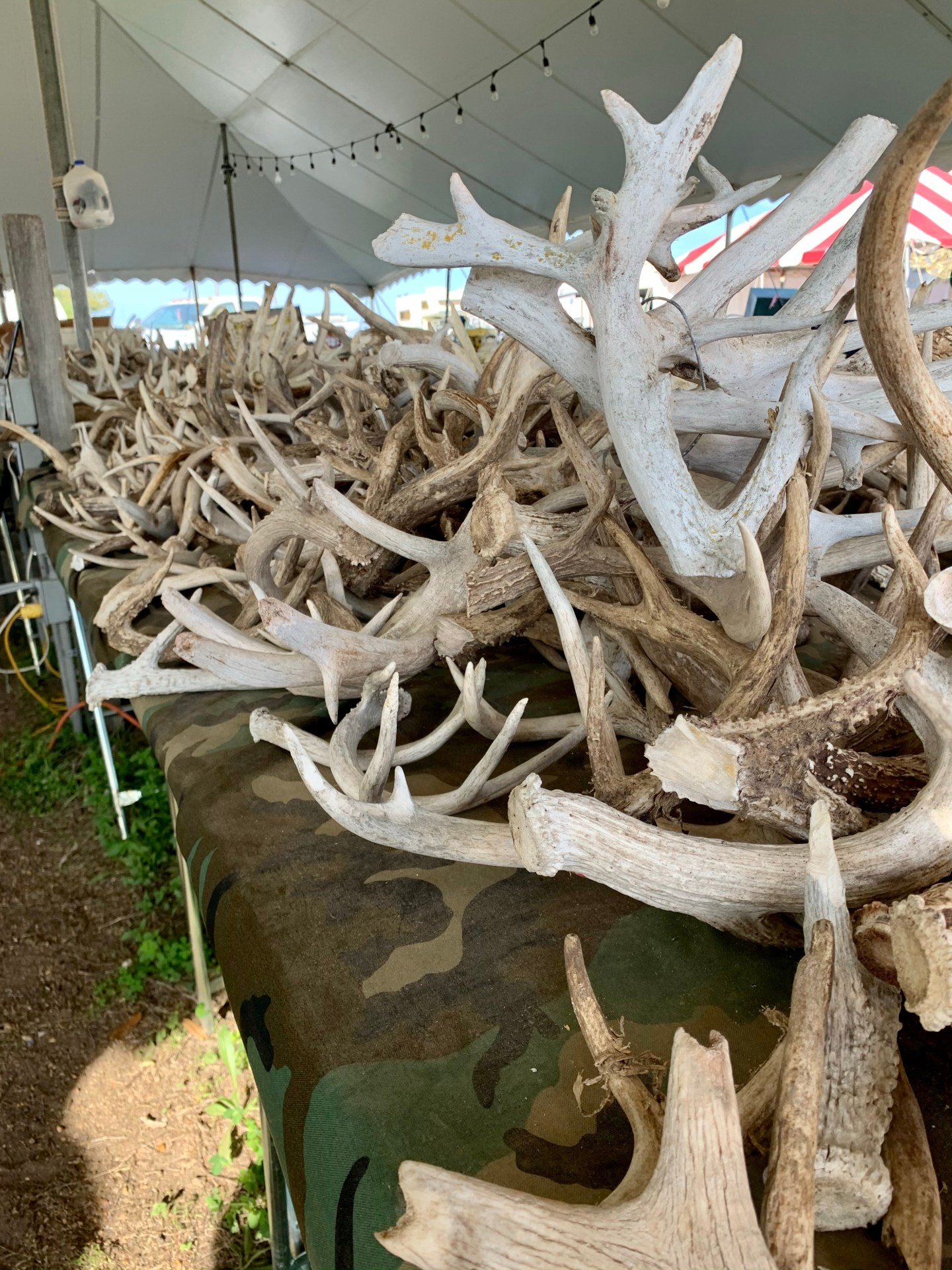 This flea market vendor sells nothing but antler sheds and flint.