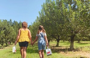 Girls picking apples in an orchard near Fort Bragg in North Carolina.
