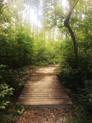 Small wooden walkway at Weymouth Woods in North Carolina.
