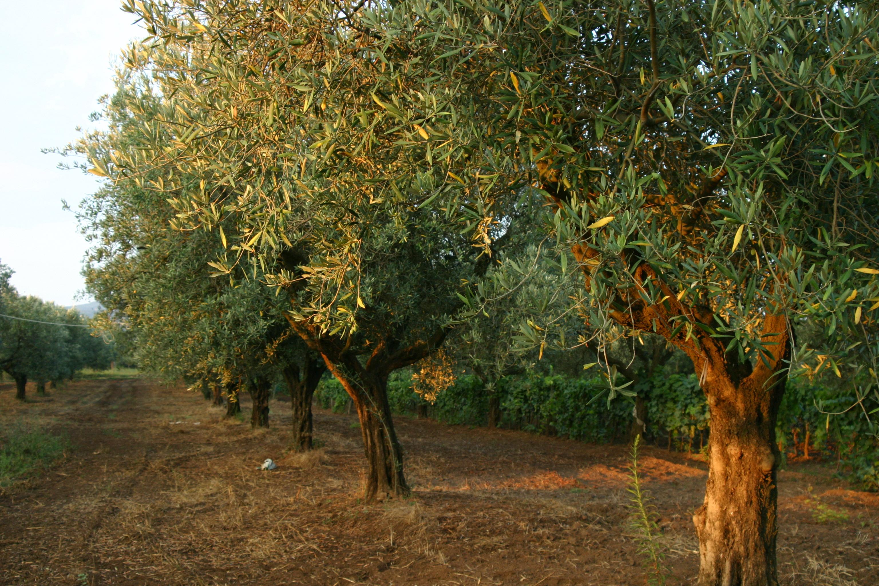 Calabria Beauty
