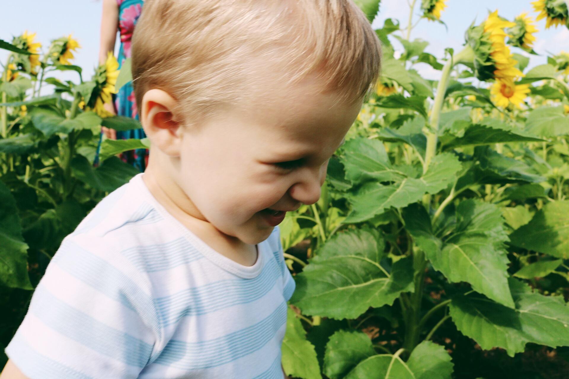 Peter in Sunflower Field