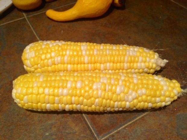 pasta with fresh sweet corn pesto corn ears
