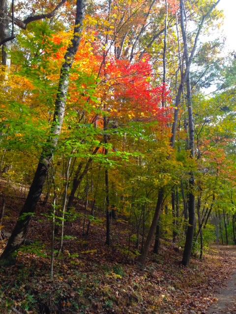 fall leaves stoplight