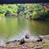 zen ducks