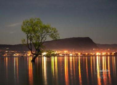 Lake Wanaka Tree Reflections