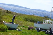 Setting a garden by the sea, Tickle Cove, NL