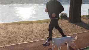 perro con localizador corriendp