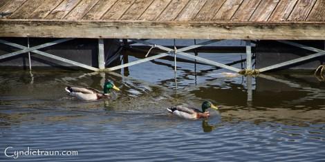 Lake Pepin Drive-5618-Edit