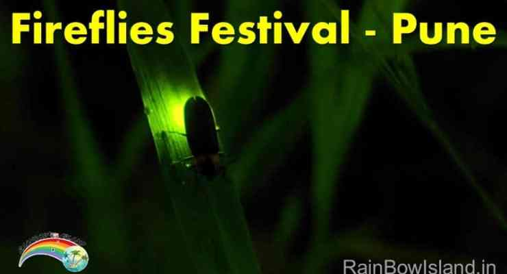 fireflies-festival-pune