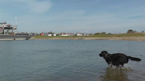Findus und der Sprung ins Wasser (9)