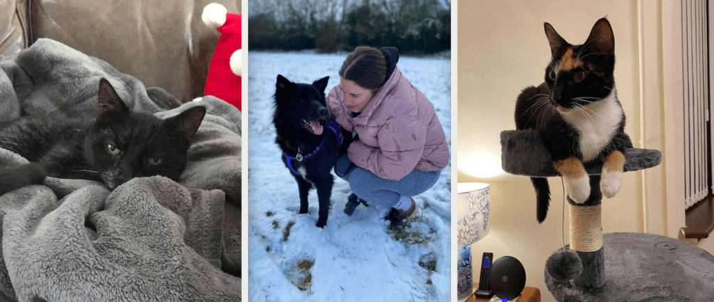 Old cat export from Fiji, Dog going for walk in the snow, cate happy in her new home. #pettravel #expatpet #fijipet #expatlife
