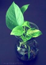 houseplant1.2