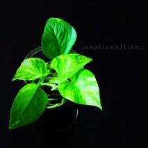 houseplant2.2