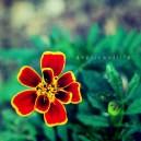 insadongflower1.2