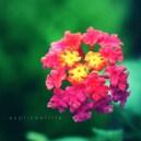 insadongflower2.2
