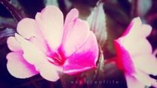 insadongflower4.2