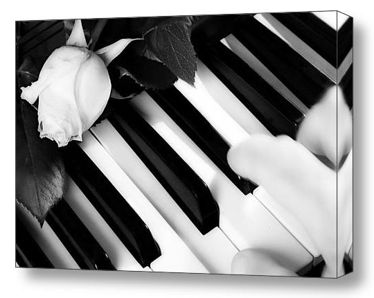 My Piano Black and White Fine Art Print and Canvas Art.