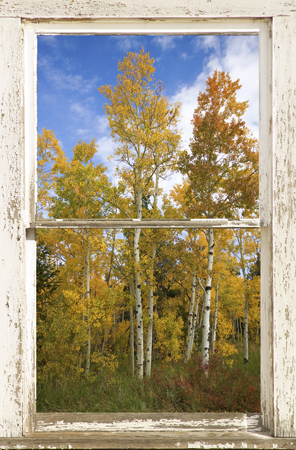 Colorado Autumn Aspens Nature Window View 450 For Immediate Release New Picture Windows Fine Art With a View