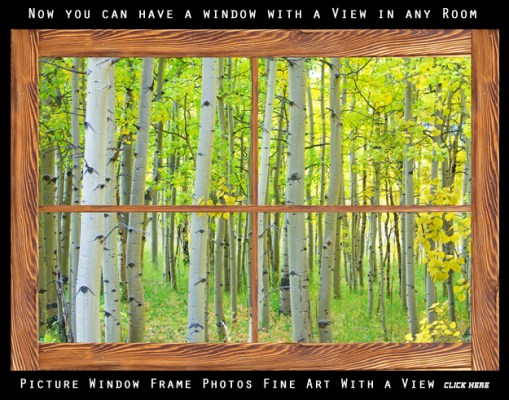 Aspen Tree Forest Autumn Picture Window Frame View