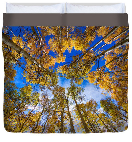 Colorful Aspen Forest Canopy King Duvet Cover