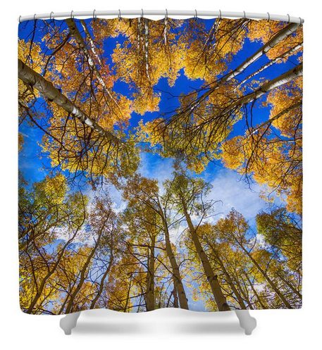Colorful Aspen Forest Canopy Shower Curtain