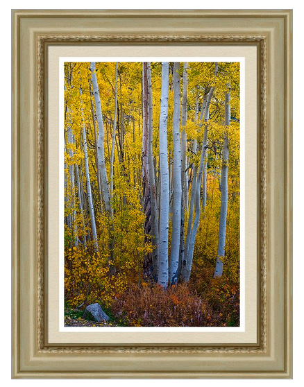 Golden Forest Portrait Framed Print