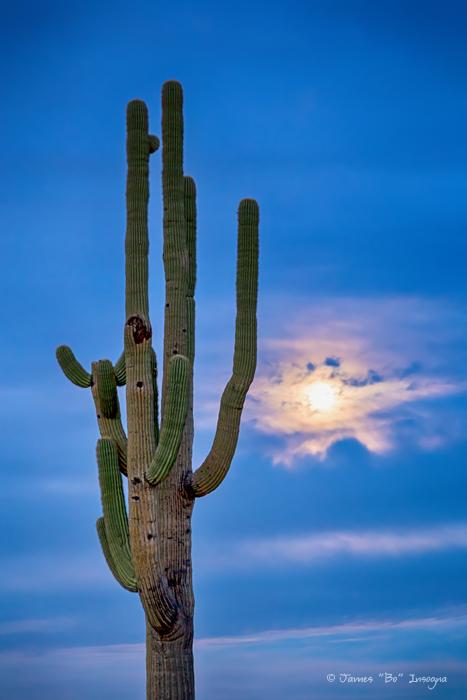 Giant Saguaro Cactus Golden Cloudy Full Moonset