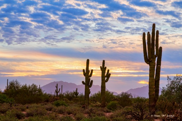 Just Another Colorful Sonoran Desert Sunrise