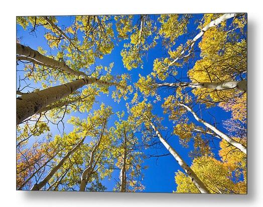 Golden View Looking Up Metal Print
