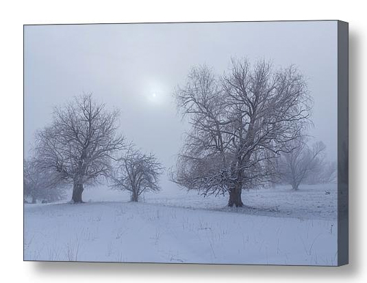 Snowy Foggy Sun Burning Canvas Print