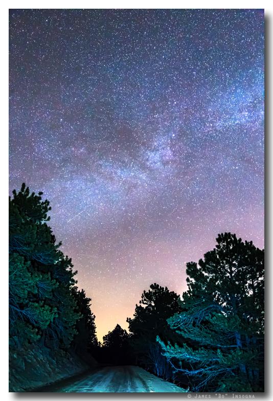 Forest Night Light