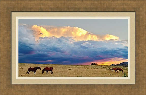 Horses On The Storm Panorama Framed Print