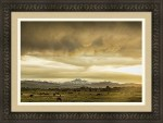 Colorado Grazing Framed Print