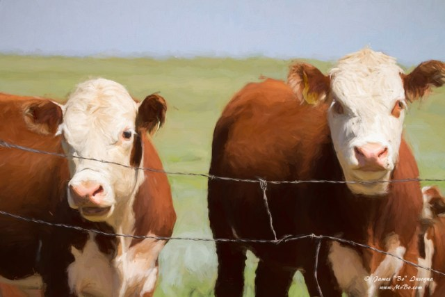 Two Cows Digital Art Painting