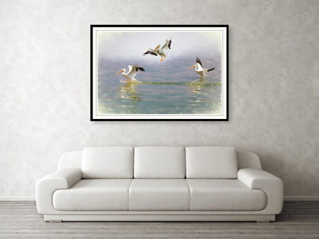 Three Pelicans Framed Print