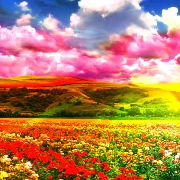 Wild Flowers Impressionism
