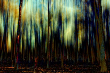 Impressionism Landscape Forest Trees