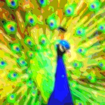 Animal Portrait Art Peacock