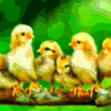 Animal Art Baby Chickens