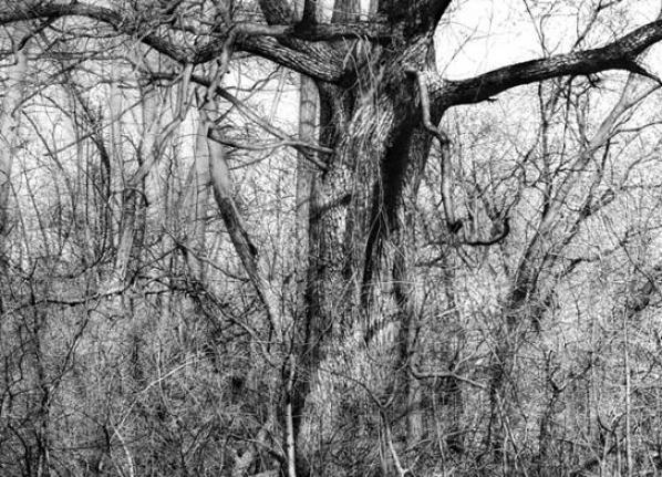 realistic-pencil-drawing-tree