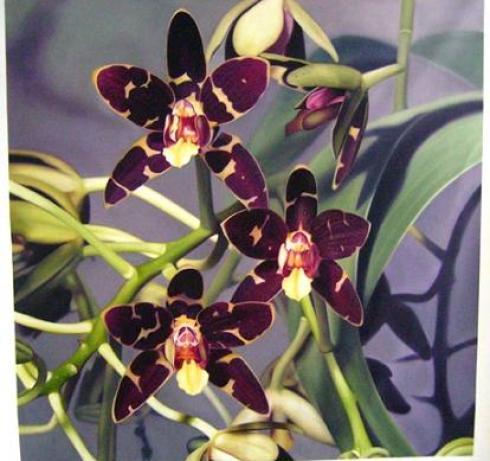 orchid-still-life