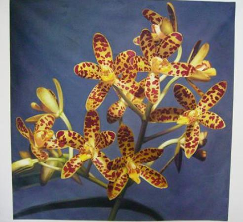 beautiful-orchid-paintings